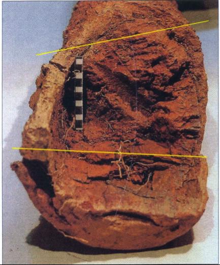 Photographie de l'intérieur de la douille de la grande serpe